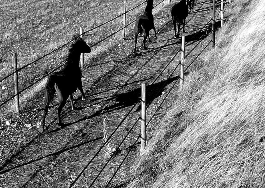 Imagen corporativa, granja de caballos salvajes